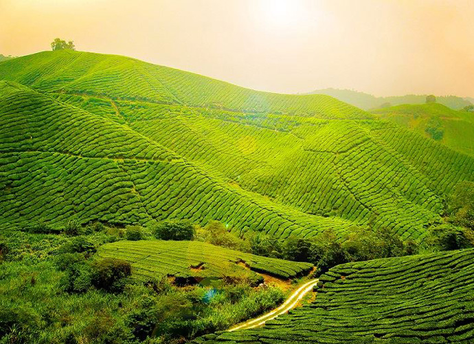 Kerala Nature Tour - 7 Nights - 8 Days