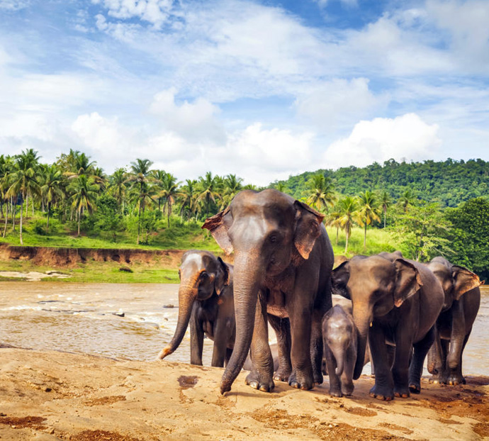 Sir Lanka Holidays Packages